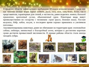 В пределах области зафиксировано пребывание 68 видов млекопитающих. Среди них
