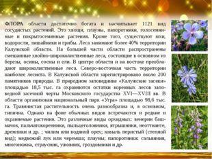 ФЛОРА области достаточно богата и насчитывает 1121 вид сосудистых растений. Э