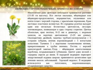 Многолетнее рано цветущее небольшое травянистое растение (15-30 см высоты). В