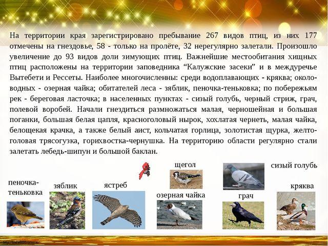 На территории края зарегистрировано пребывание 267 видов птиц, из них 177 отм...