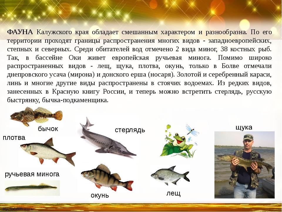 ФАУНА Калужского края обладает смешанным характером и разнообразна. По его те...