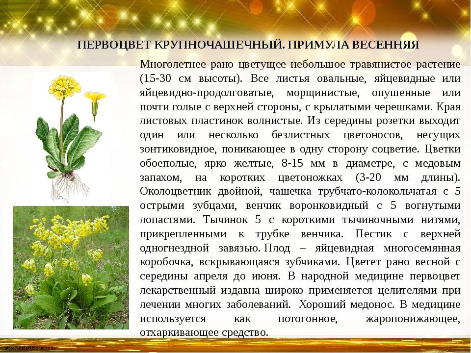 Многолетнее рано цветущее небольшое травянистое растение (15-30 см высоты). В...