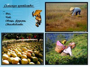Сельское хозяйство: - Рис, Чай, Овощи, фрукты, Свиноводство.