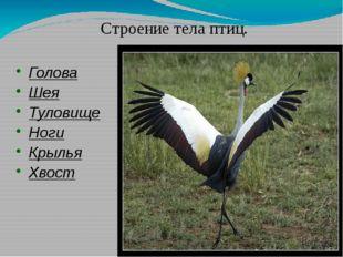 Голова Шея Туловище Ноги Крылья Хвост Строение тела птиц.