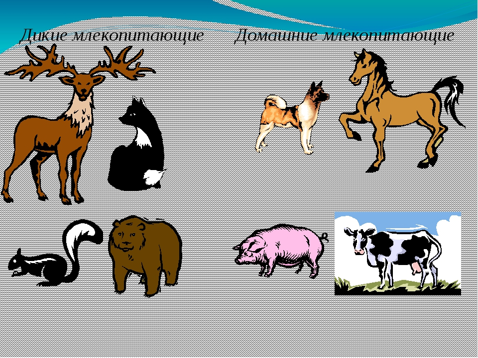Домашние млекопитающие – это те, о которых заботится человек, строит им жилищ...