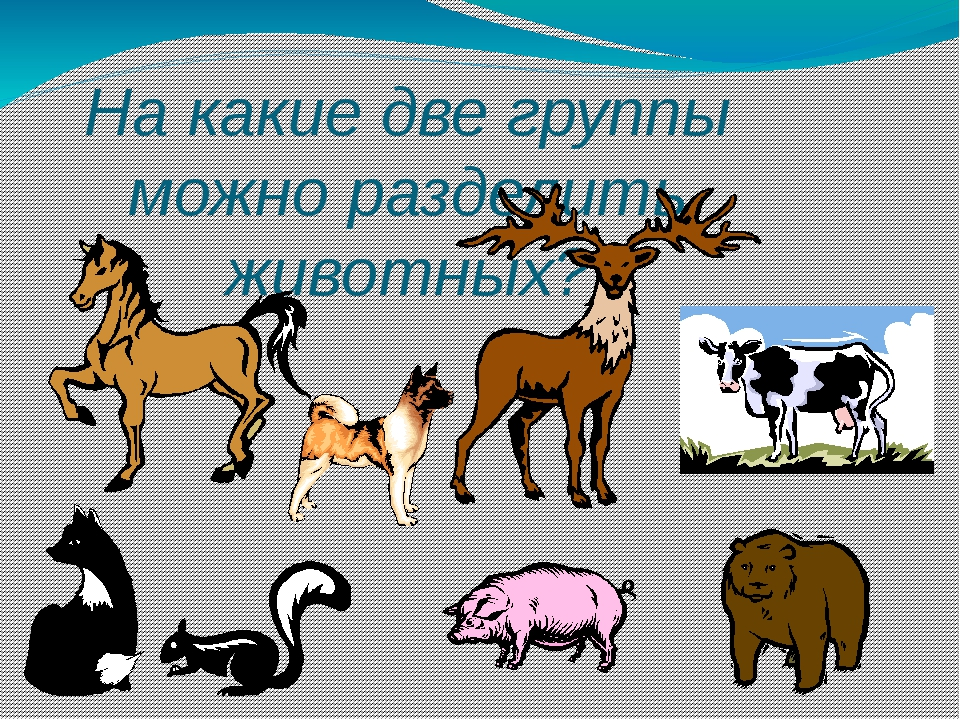 Дикие млекопитающие Домашние млекопитающие Разделение на группы