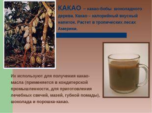 КАКАО – какао-бобы шоколадного дерева. Какао – калорийный вкусный напиток. Ра