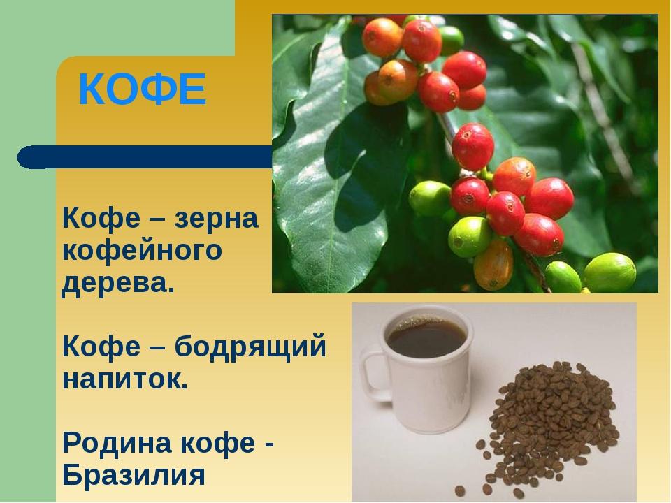 Кофе – зерна кофейного дерева. Кофе – бодрящий напиток. Родина кофе - Бразили...