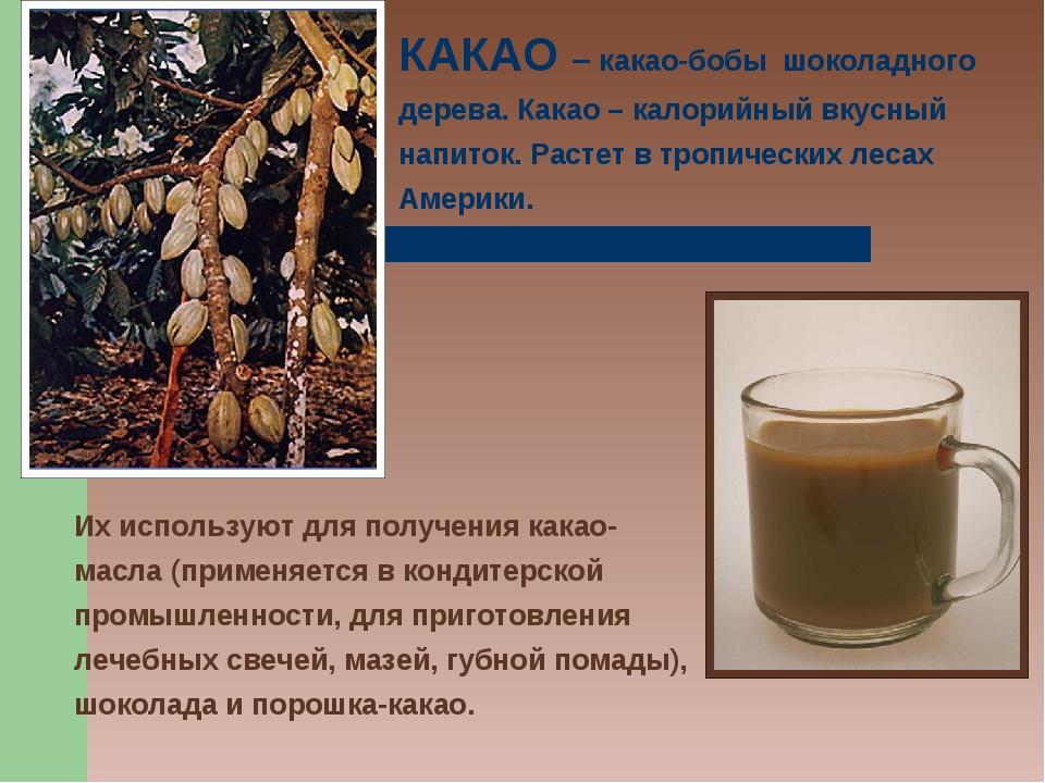 КАКАО – какао-бобы шоколадного дерева. Какао – калорийный вкусный напиток. Ра...