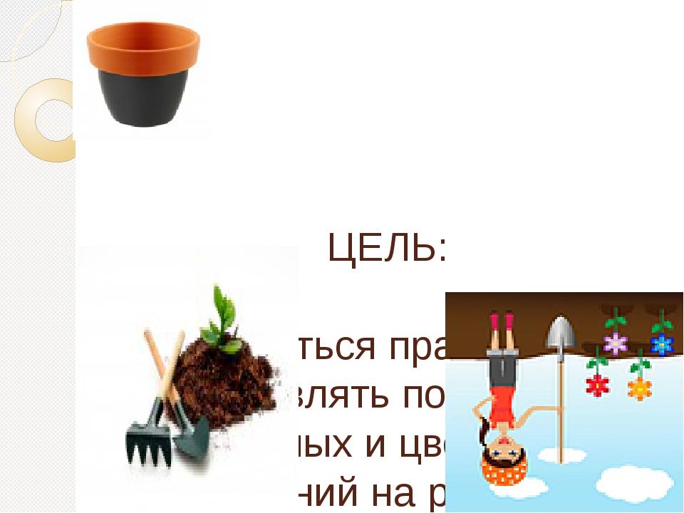 ЦЕЛЬ: научиться правильно осуществлять посев семян овощных и цветковых расте...