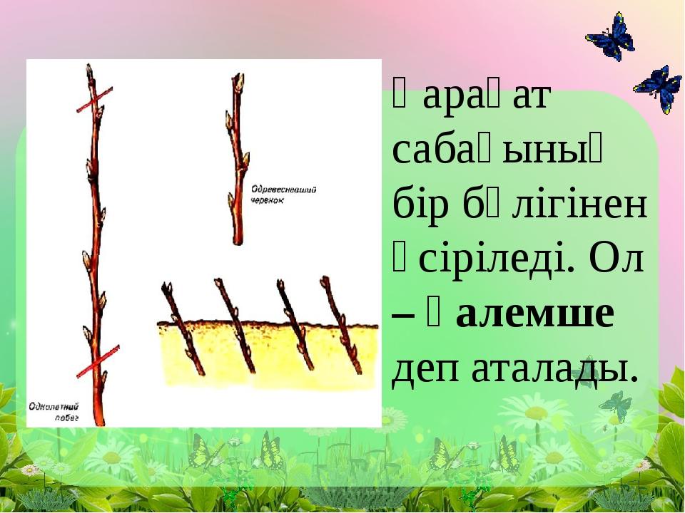 Қарақат сабағының бір бөлігінен өсіріледі. Ол – қалемше деп аталады.