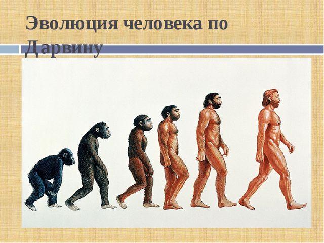 Эволюция человека по Дарвину
