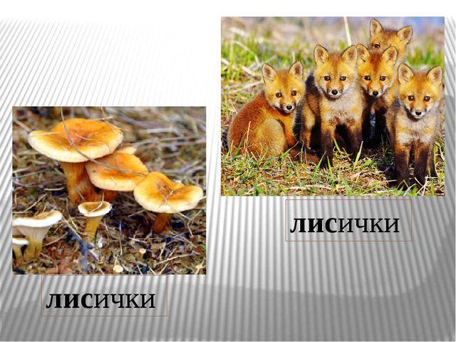 лисички лисички