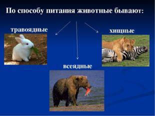 По способу питания животные бывают: травоядные хищные всеядные