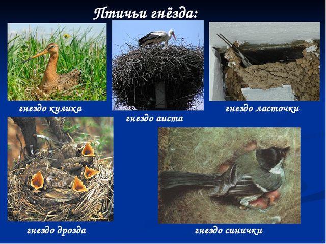 Птичьи гнёзда: гнездо кулика гнездо ласточки гнездо дрозда гнездо синички гне...