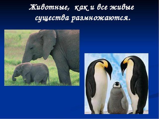Животные, как и все живые существа размножаются.