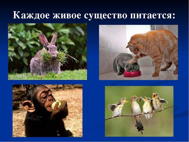 Каждое живое существо питается: