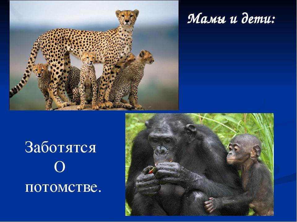 Мамы и дети: Заботятся О потомстве.