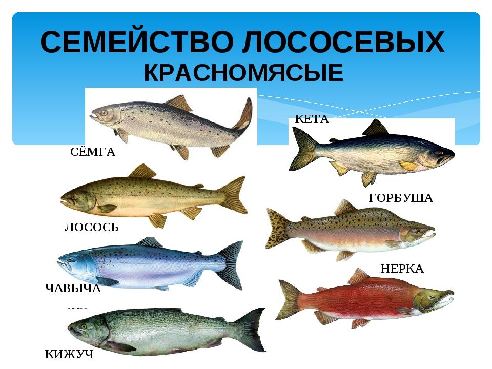 Презентация по географии белое море