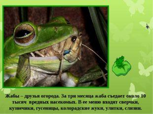 Жабы – друзья огорода. За три месяца жаба съедает около 10 тысяч вредных насе