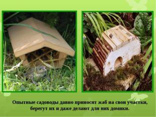 Опытные садоводы давно приносят жаб на свои участки, берегут их и даже делают