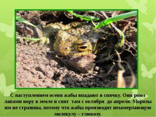 С наступлением осени жабы впадают в спячку. Они роют лапами нору в земле и сп