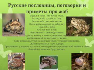 Русские пословицы, поговорки и приметы про жаб Бедный в нуже - что жаба в луж