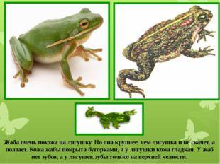 Жаба очень похожа на лягушку. Но она крупнее, чем лягушка и не скачет, а полз
