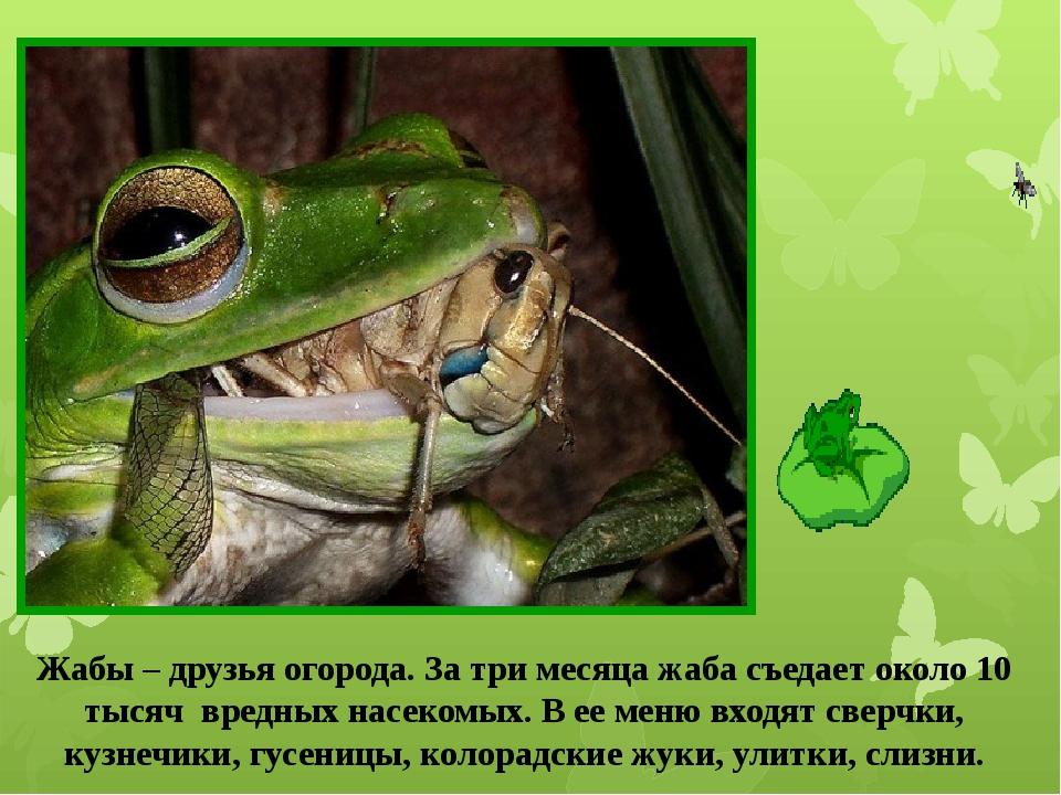 Жабы – друзья огорода. За три месяца жаба съедает около 10 тысяч вредных насе...