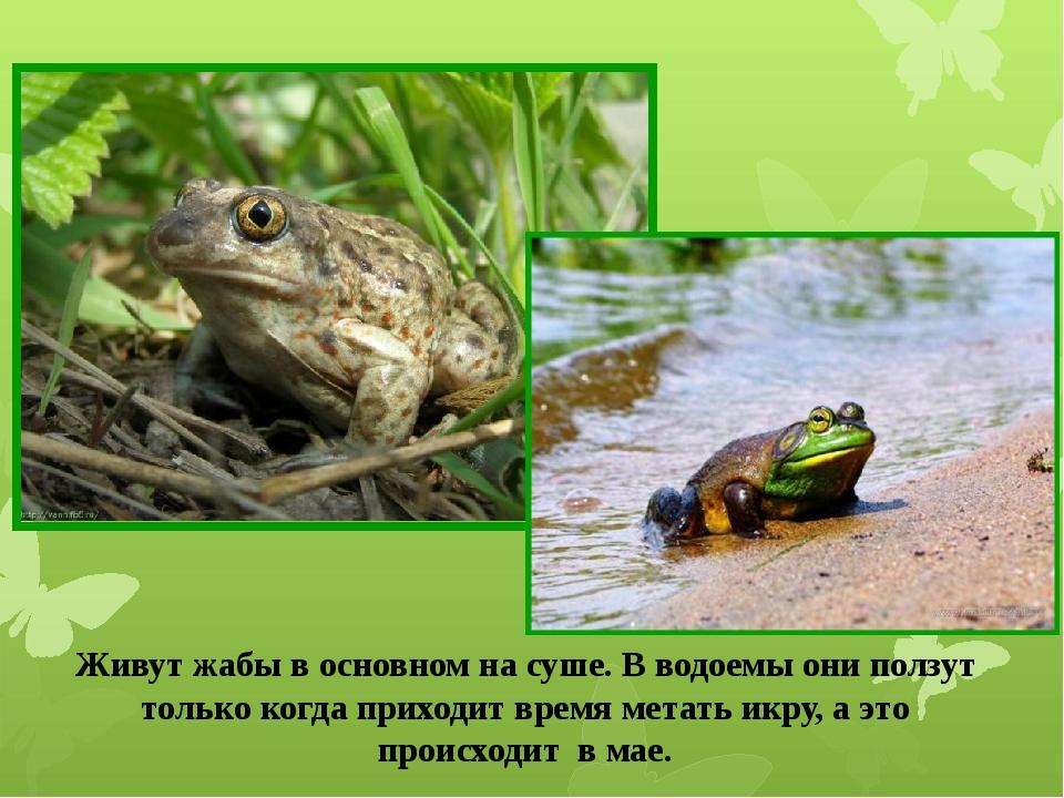Живут жабы в основном на суше. В водоемы они ползут только когда приходит вре...
