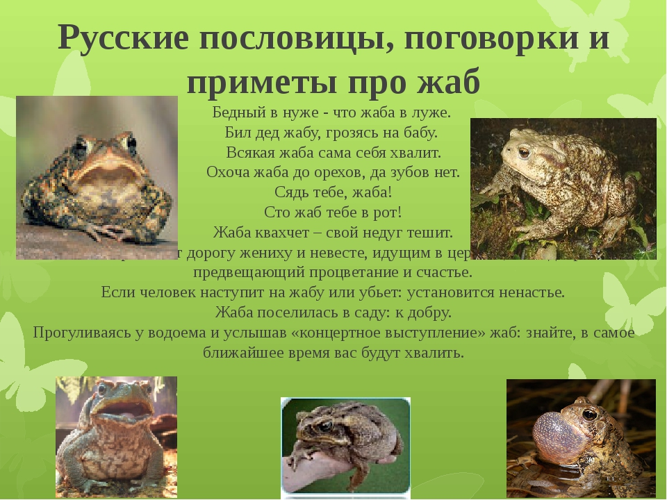 Русские пословицы, поговорки и приметы про жаб Бедный в нуже - что жаба в луж...
