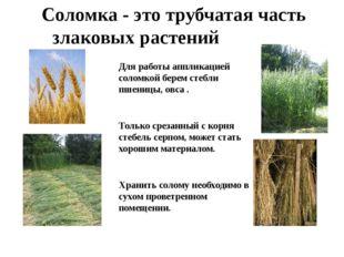 Соломка - это трубчатая часть злаковых растений Для работы аппликацией соломк
