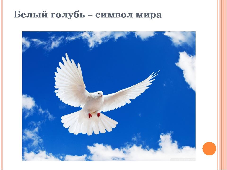Белый голубь – символ мира