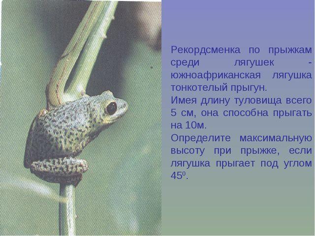 Рекордсменка по прыжкам среди лягушек - южноафриканская лягушка тонкотелый пр...