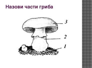 Назови части гриба