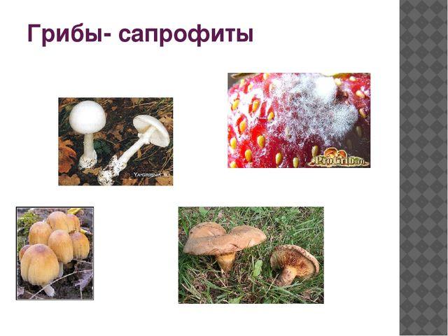 Грибы- сапрофиты