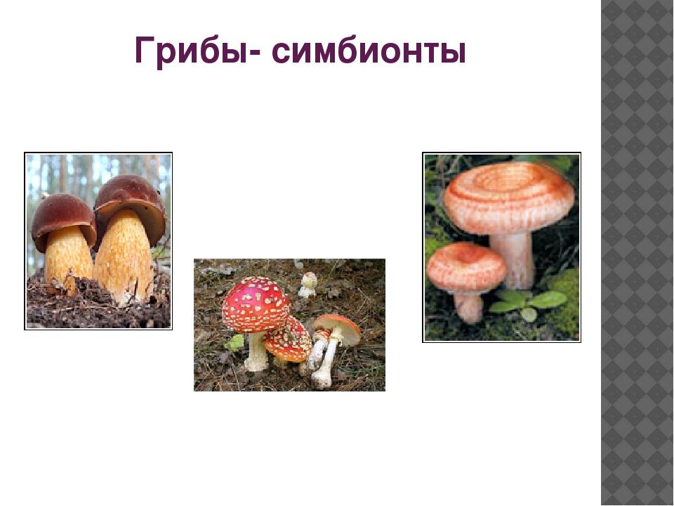 Грибы- симбионты