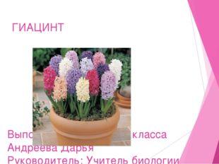 ГИАЦИНТ Выполнила ;ученица 6Б класса Андреева Дарья Руководитель: Учитель био
