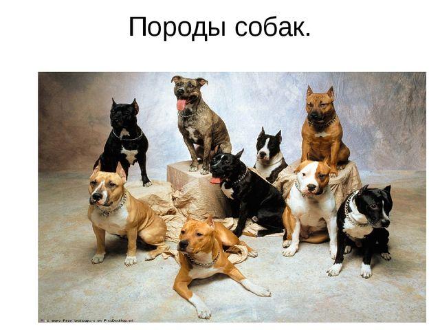 Породы собак.