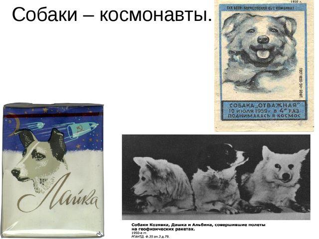 Собаки – космонавты.