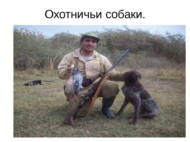 Охотничьи собаки.