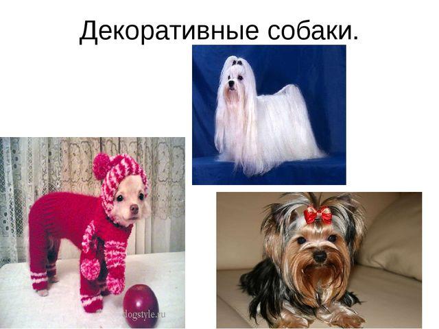 Декоративные собаки.