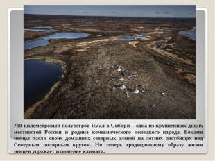 700-километровый полуостров Ямал в Сибири – одна из крупнейших диких местност