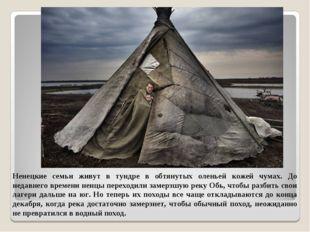 Ненецкие семьи живут в тундре в обтянутых оленьей кожей чумах. До недавнего в