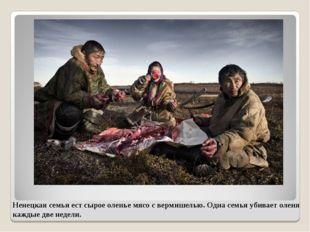 Ненецкая семья ест сырое оленье мясо с вермишелью. Одна семья убивает оленя к