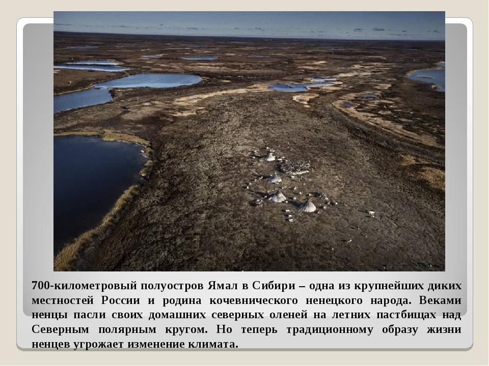 700-километровый полуостров Ямал в Сибири – одна из крупнейших диких местност...