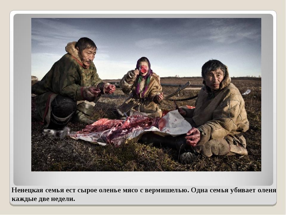 Ненецкая семья ест сырое оленье мясо с вермишелью. Одна семья убивает оленя к...