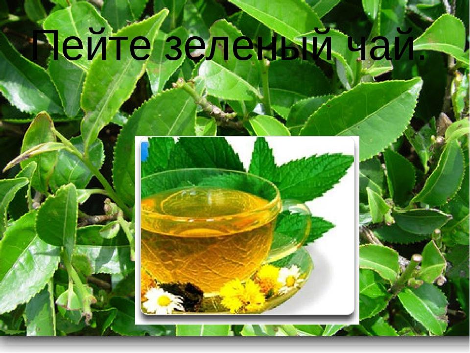 Пейте зеленый чай.