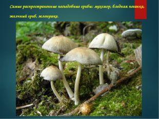 Самые распространенные несъедобные грибы: мухомор, бледная поганка, желчный г