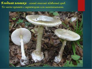 Бледная поганка - самый опасный ядовитый гриб. Ее часто путают с сыроежками и